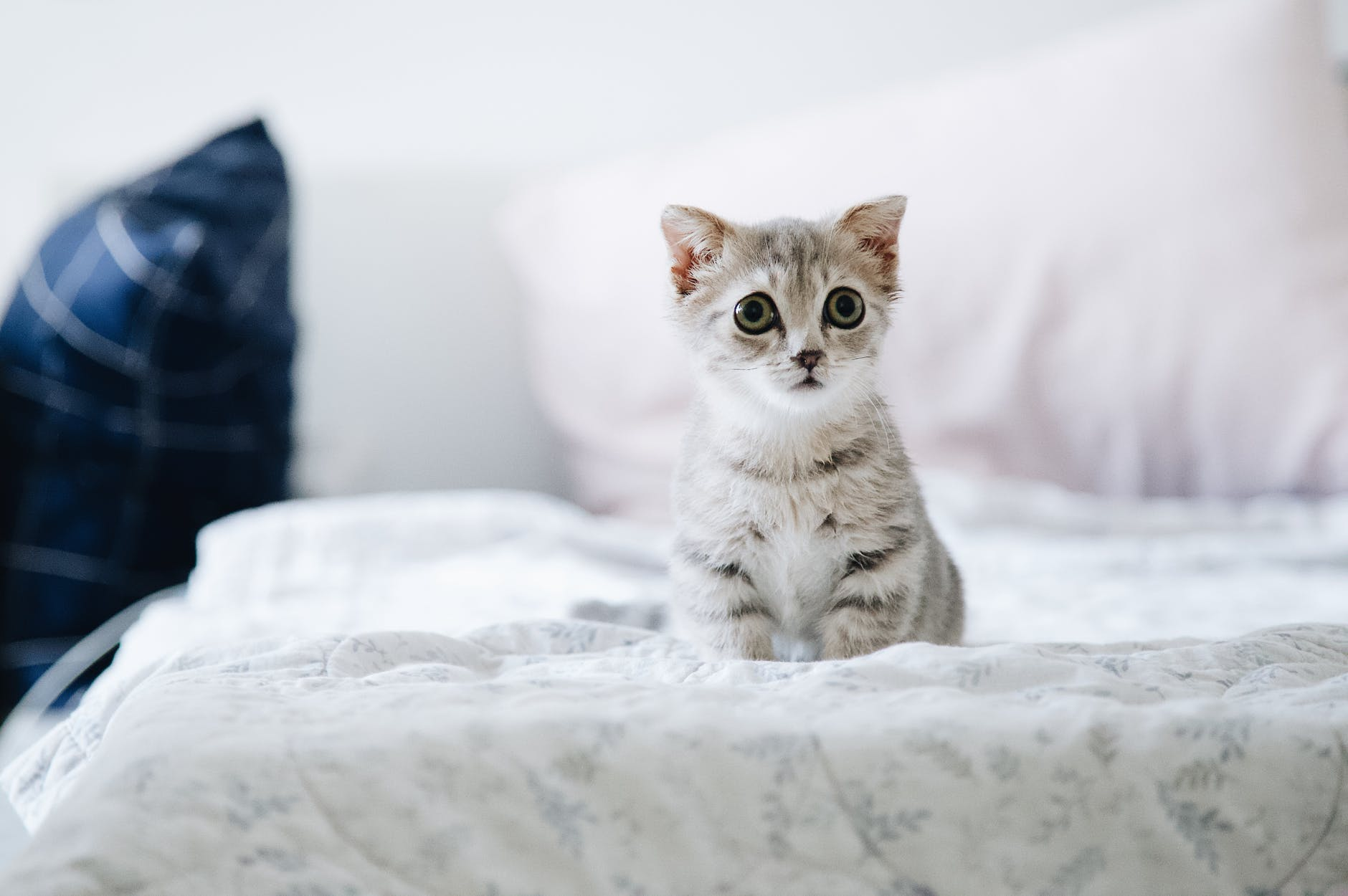 Як правильно мити кішку?