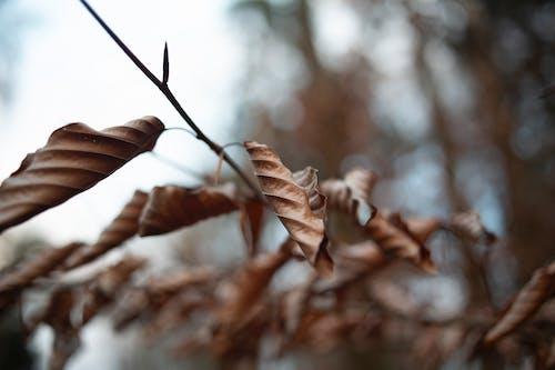 Δωρεάν στοκ φωτογραφιών με macro, κλαδί, μαραμένος, ξηρά φύλλα