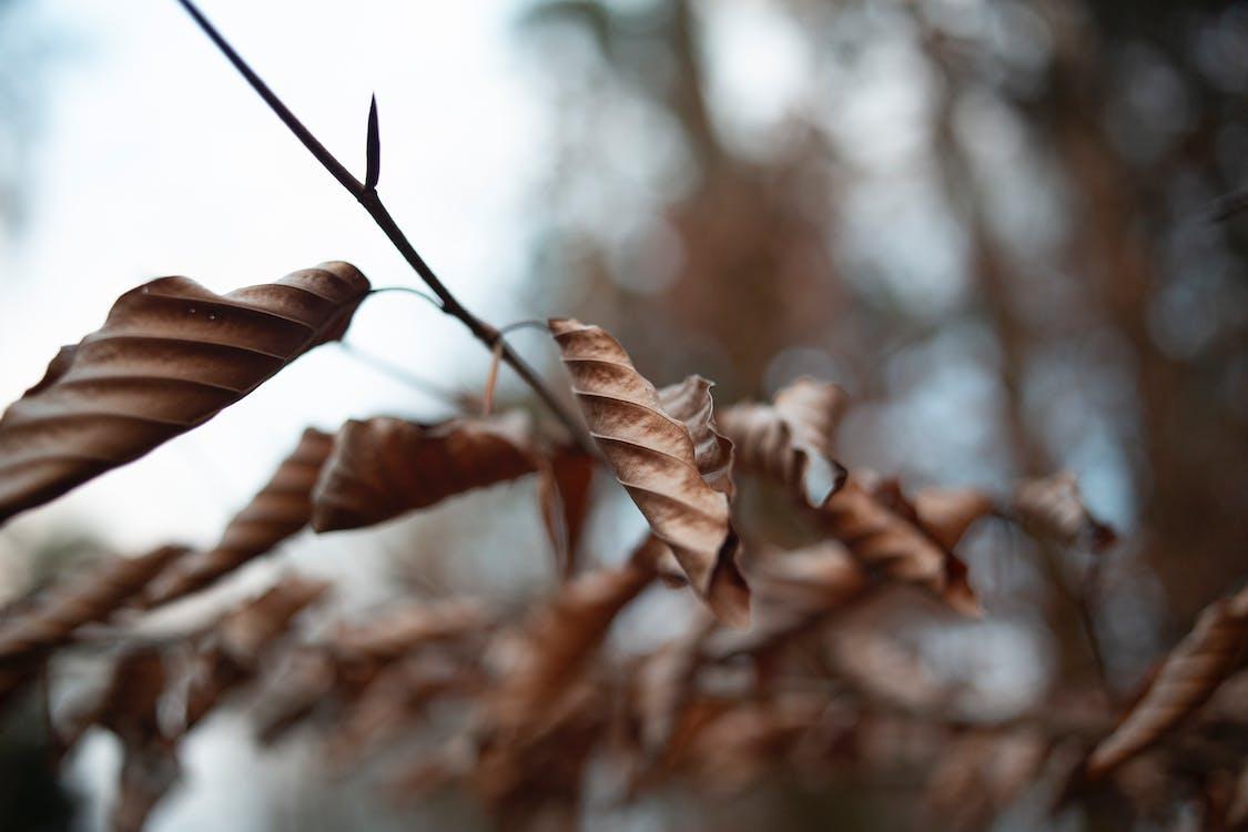 chi nhánh, khô, khô héo