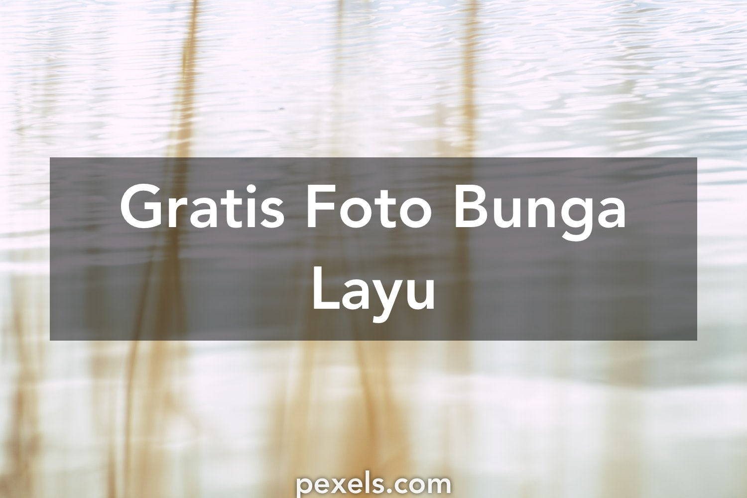 Download 45 Wallpaper Bunga Layu HD Gratid