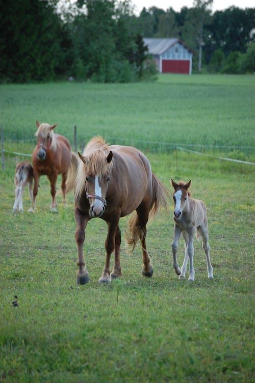 Δωρεάν στοκ φωτογραφιών με άλογο