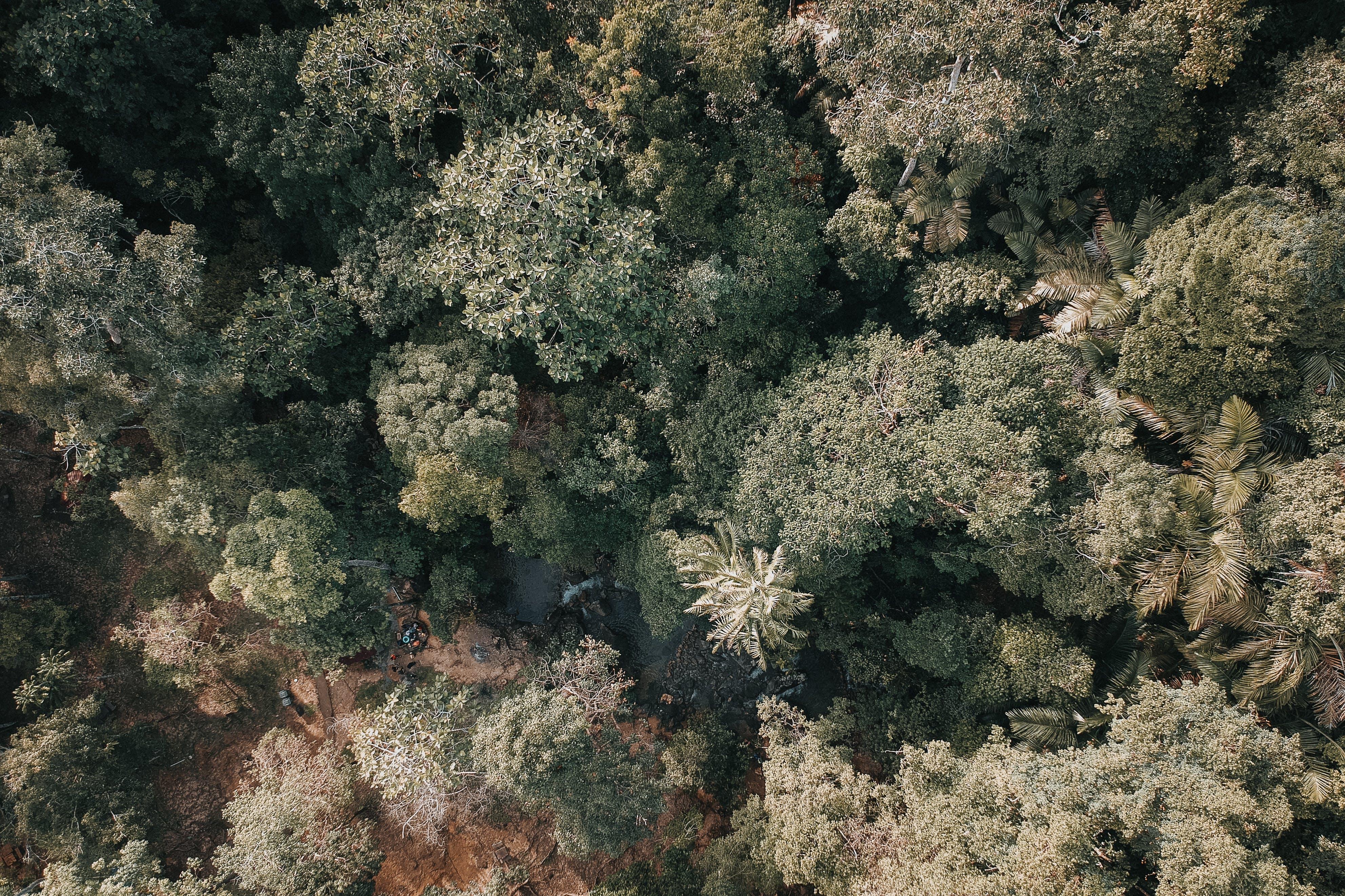 Gratis lagerfoto af fra oven, fugleperspektiv, miljø, skov