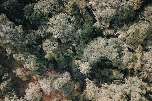 Бесплатное стоковое фото с деревья, лес, окружающая среда, с высоты птичьего полета