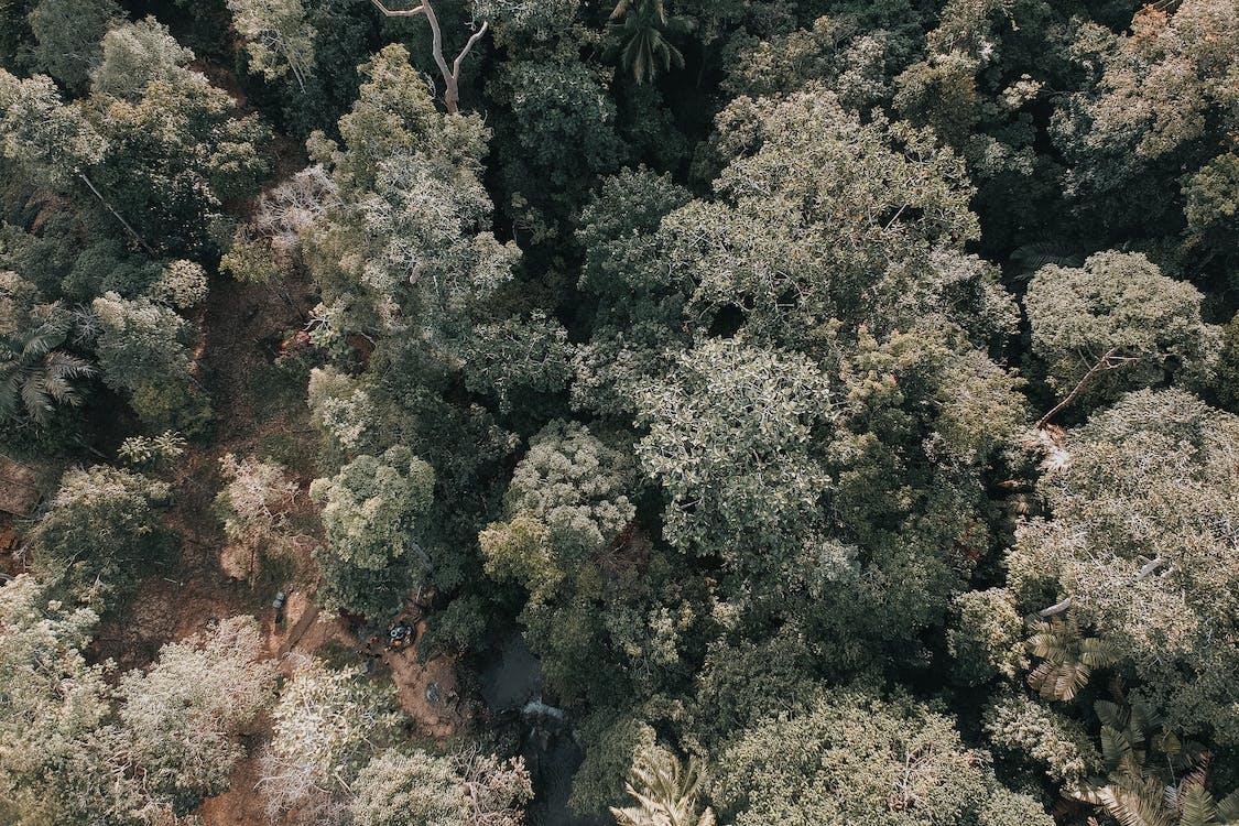 공중 촬영, 나무, 숲