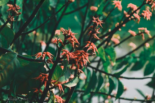 Безкоштовне стокове фото на тему «вродлива, делікатний, зелене листя, квітка»