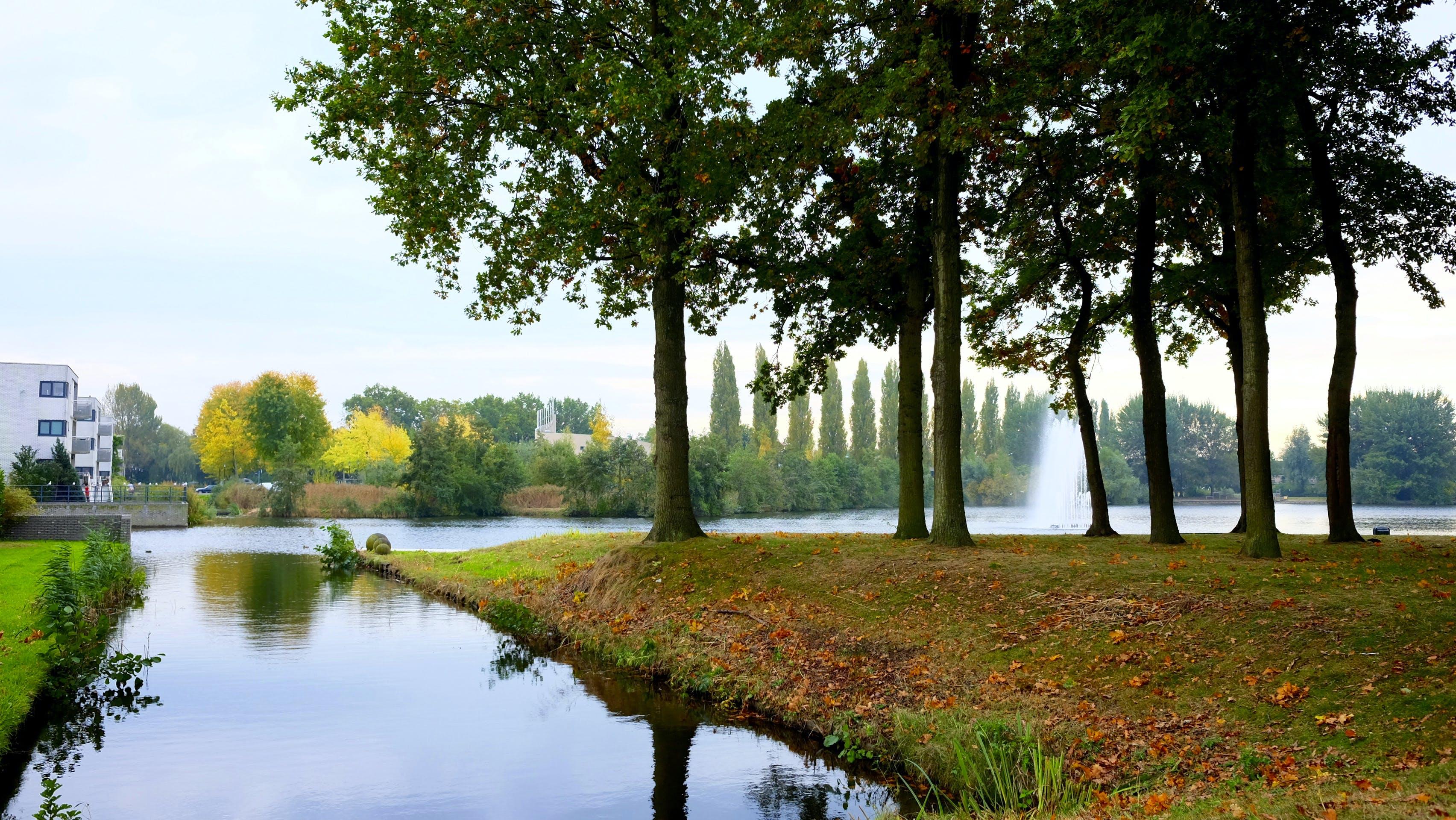 Gratis stockfoto met bomen, gras, h2o, landschap