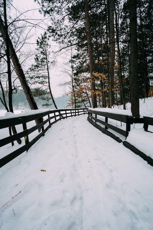 деревья, зима, лес