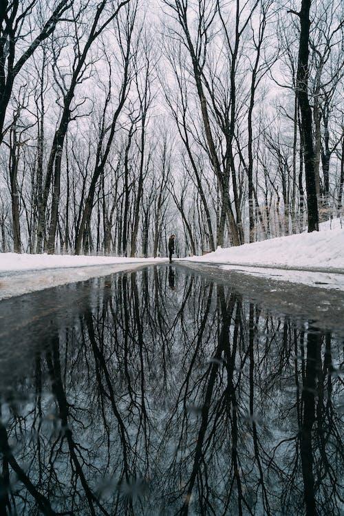 Fotobanka sbezplatnými fotkami na tému chladný, mláka, odlesk, počasie
