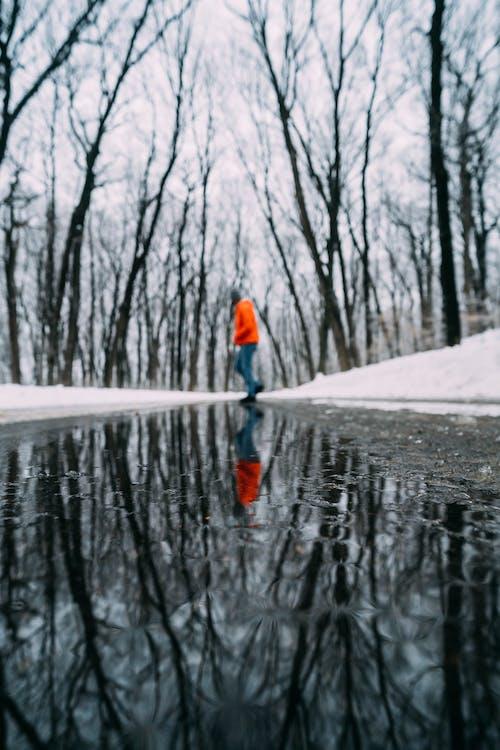 Gratis stockfoto met bomen, jaargetij, kou, plas