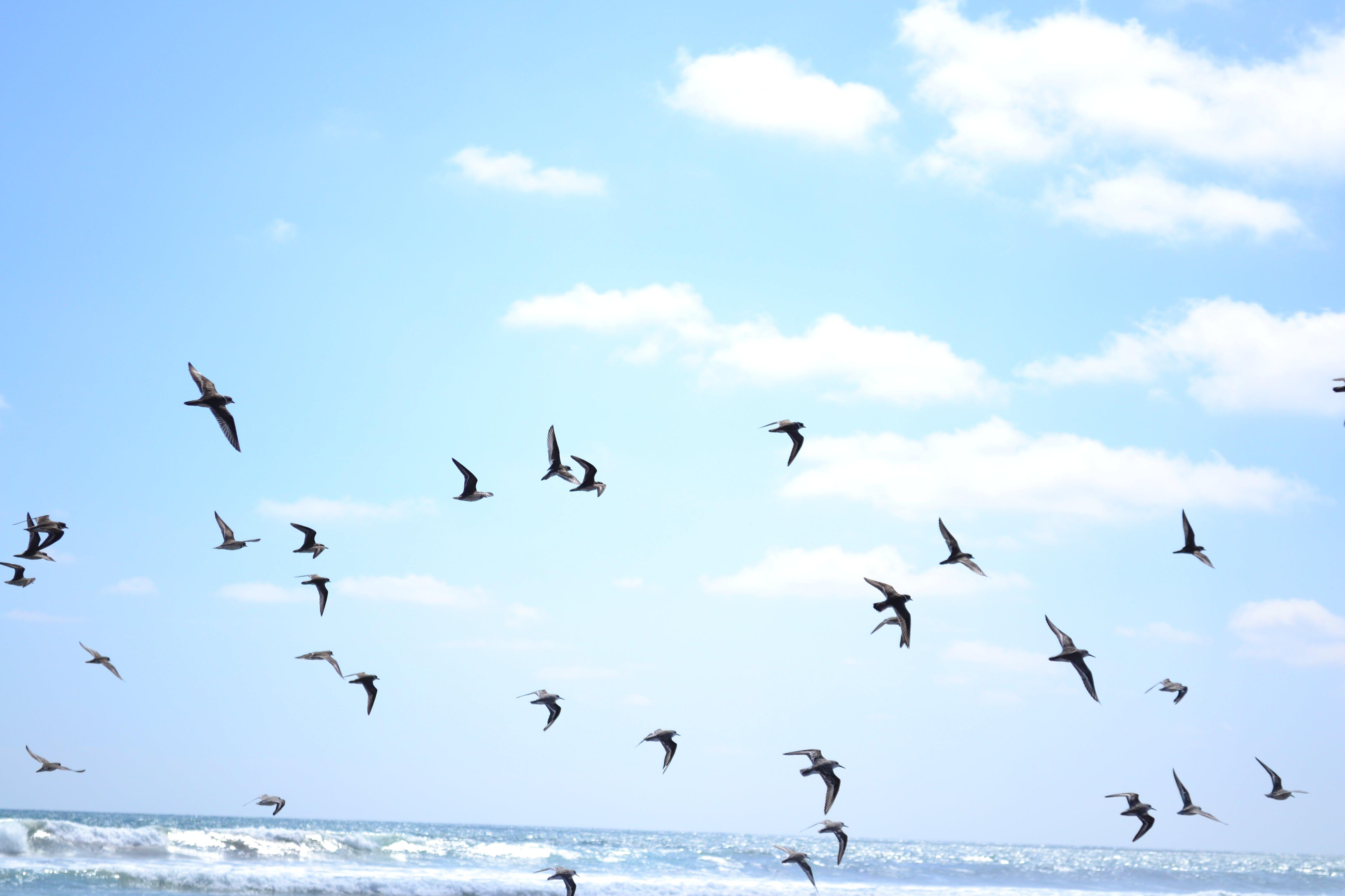 Free stock photo of birds, sea bird
