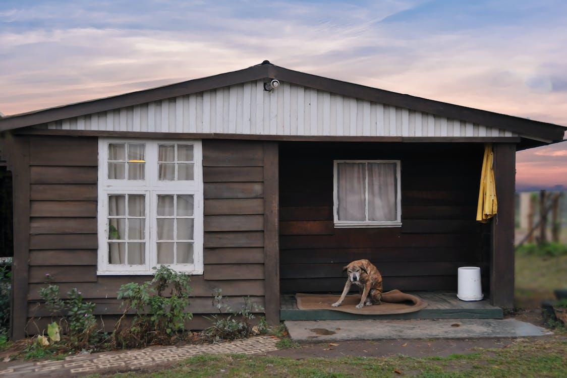 anima, arkitektur, hund