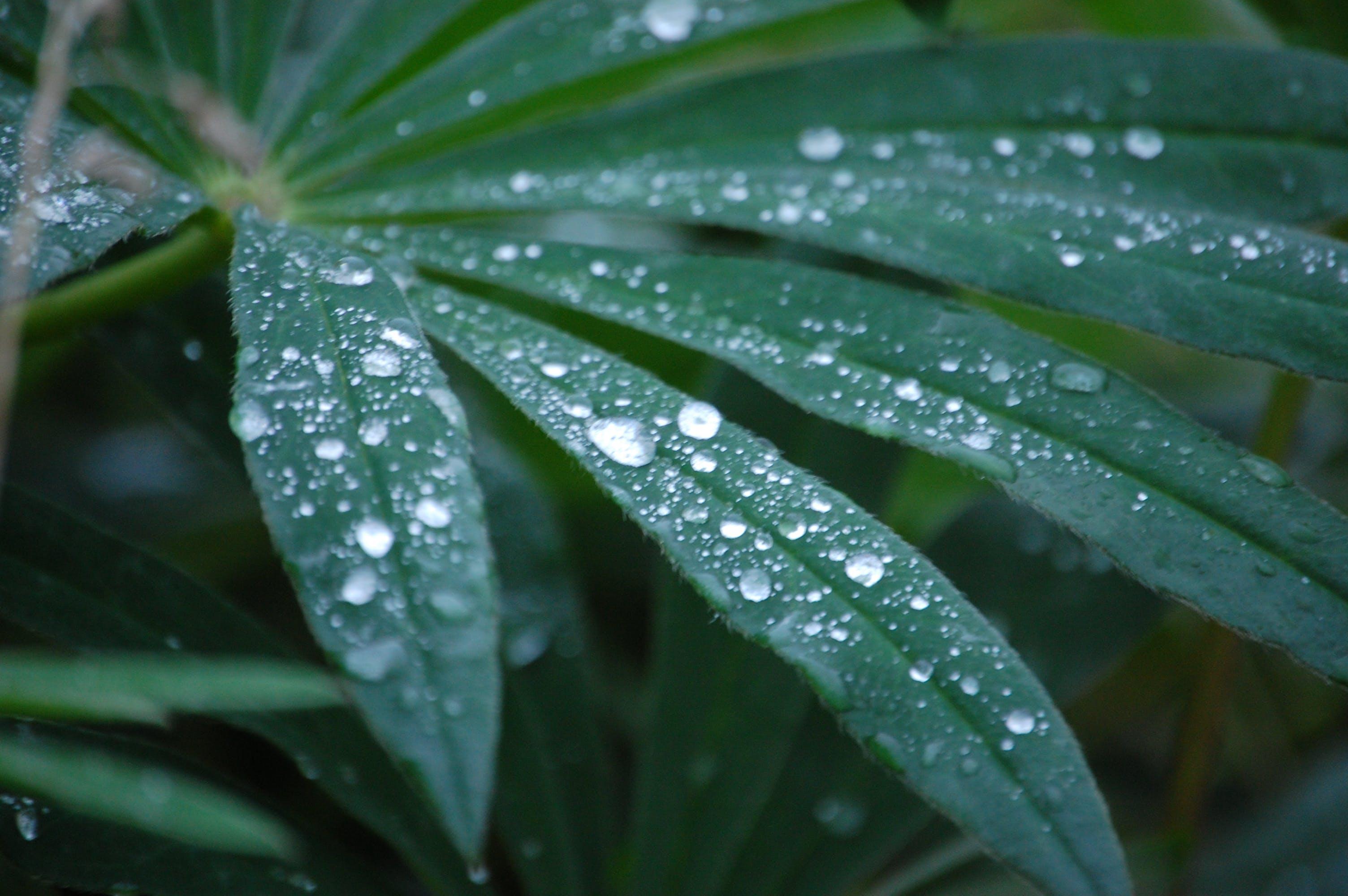 Fotos de stock gratuitas de gotas de lluvia