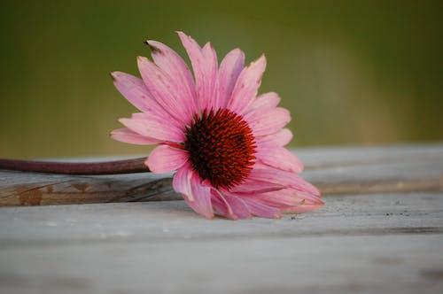 Δωρεάν στοκ φωτογραφιών με λουλούδι