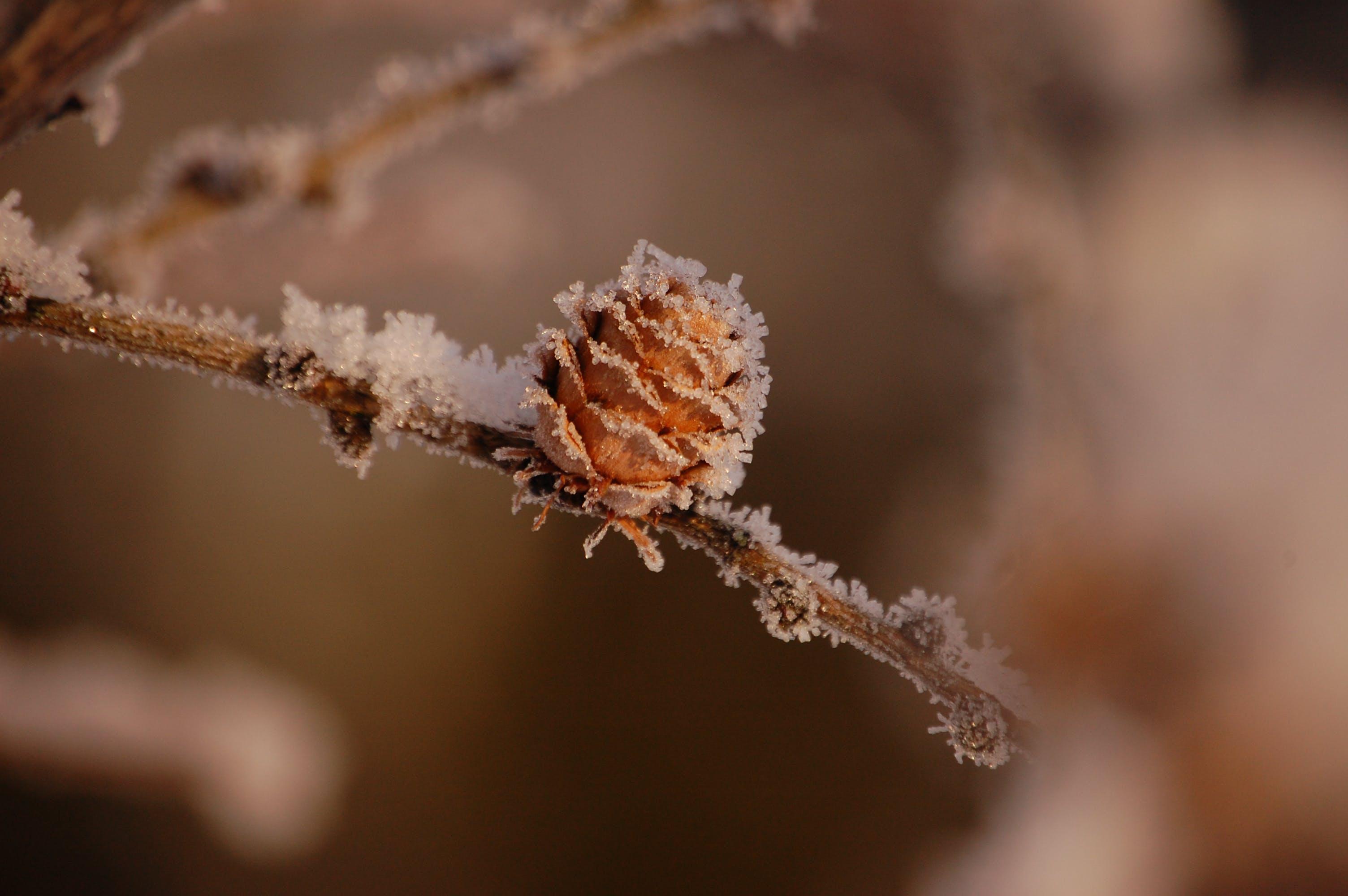 Fotos de stock gratuitas de invierno
