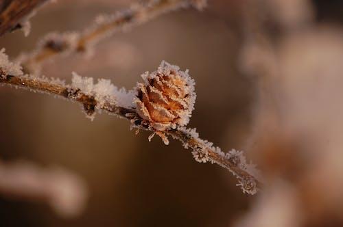 Základová fotografie zdarma na téma zima