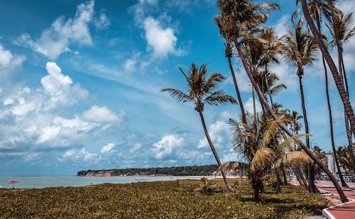 Fotos de stock gratuitas de cabaña de playa, cabañas de playa, en la playa, paraíso