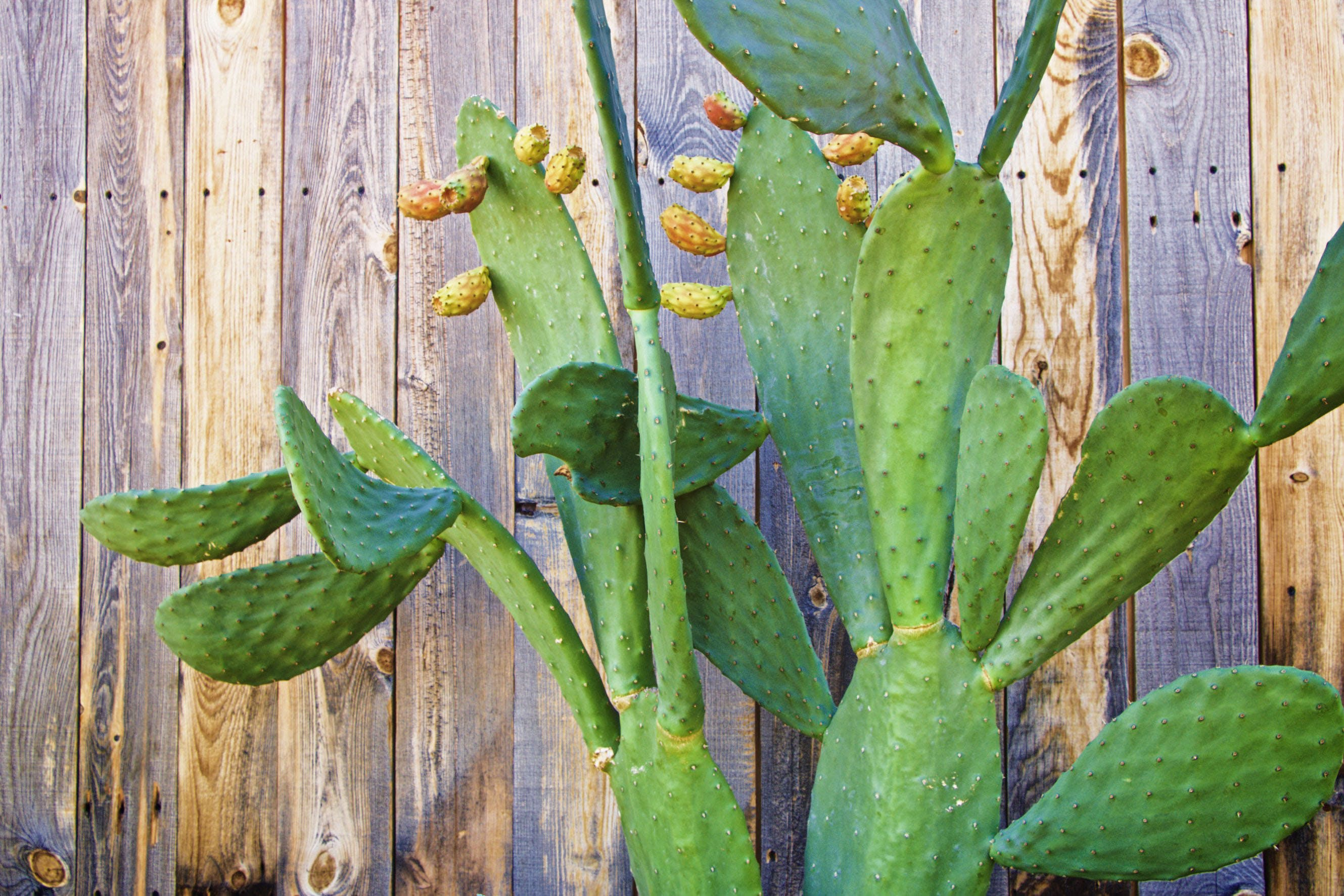 Free stock photo of wood, plant, fence, cactus