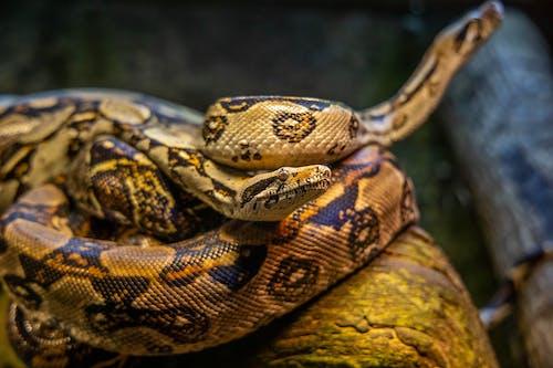 Kostnadsfri bild av biologi, djur, djurfotografi, exotisk