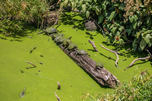 Foto d'estoc gratuïta de animal salvatge, tortuga, vida natural