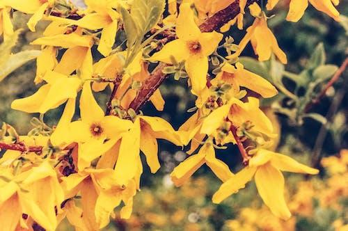 Free stock photo of background image, beautiful flowers, flowers
