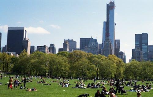 Imagine de stoc gratuită din aglomerație, arbori, arhitectură, cer
