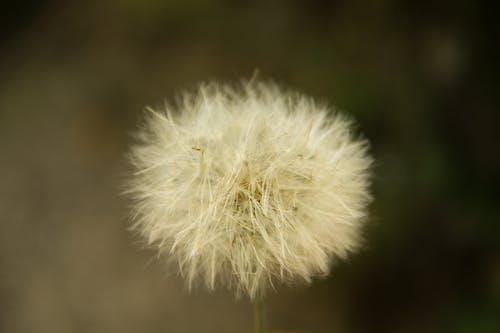Kostnadsfri bild av kärlek blomma
