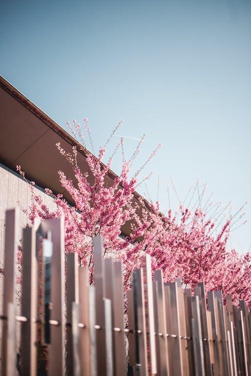 Fotobanka sbezplatnými fotkami na tému kvety, ohrada, rastlina