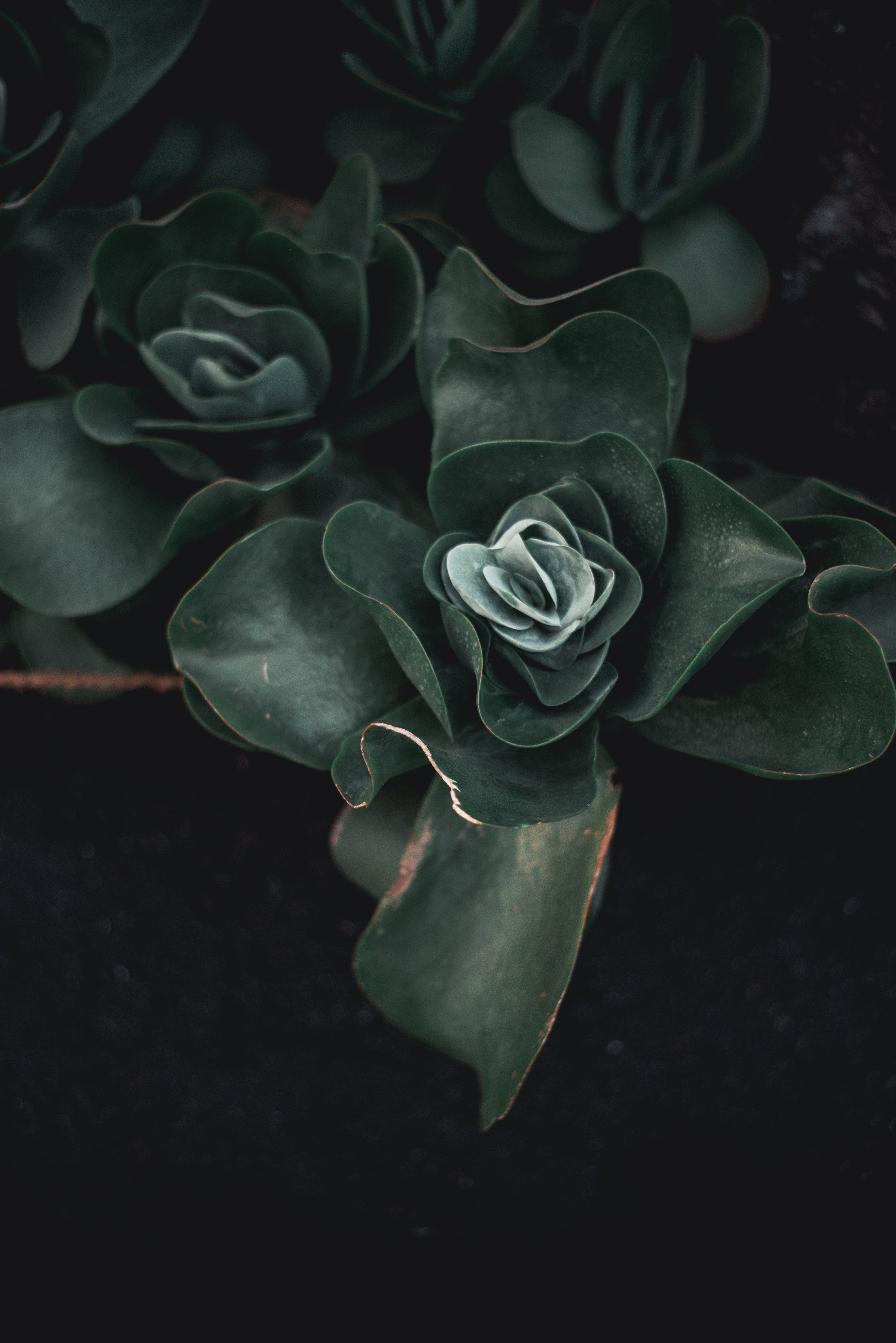 Foto d'estoc gratuïta de bonic, botànic, brillant, color