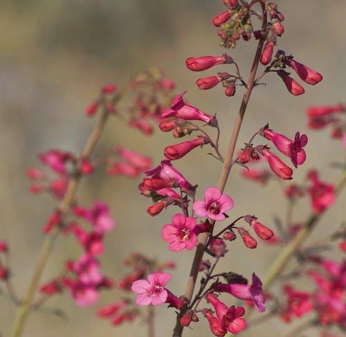 Foto d'estoc gratuïta de bellesa a la natura, desert, flor