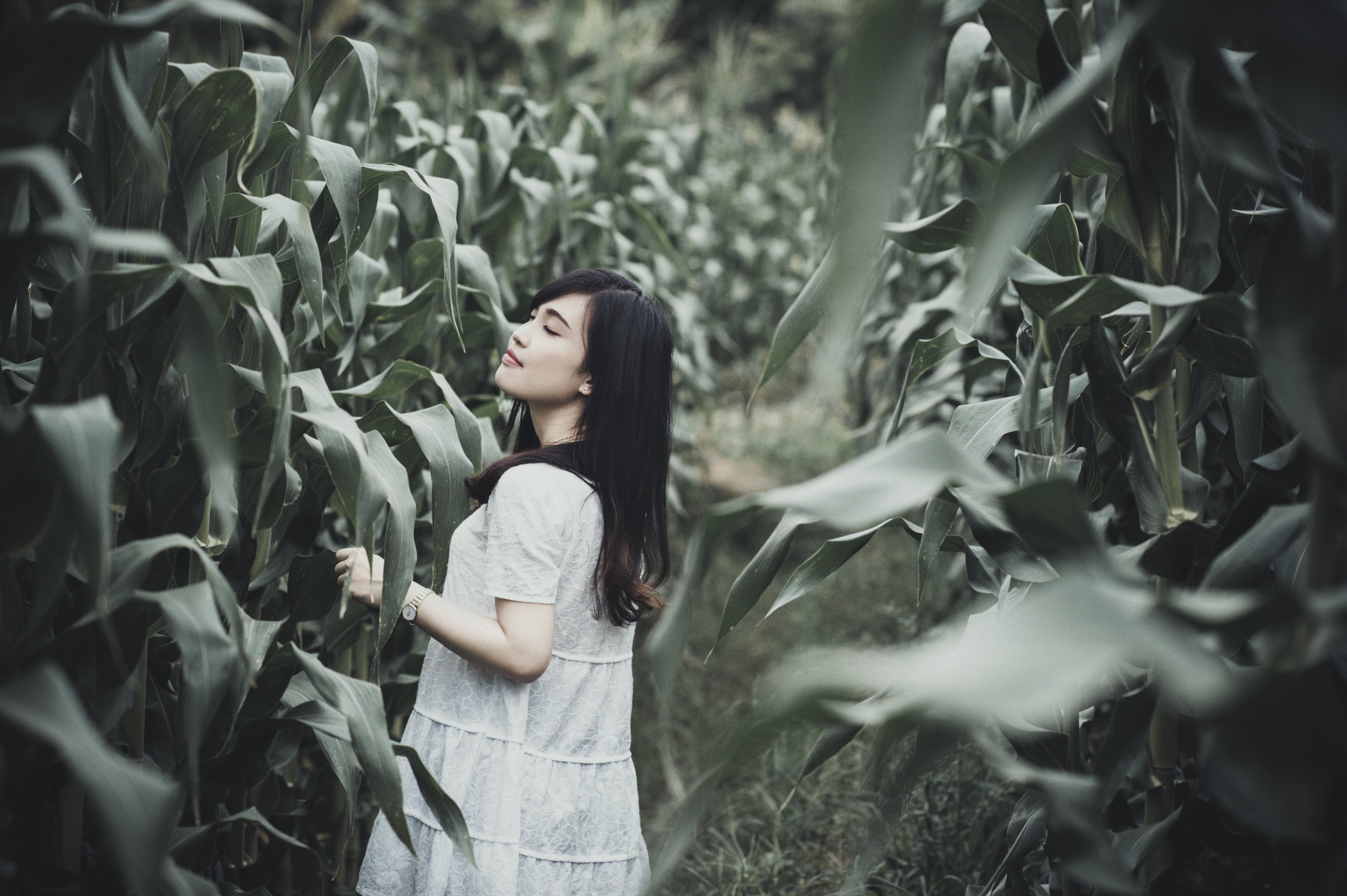 Woman Surrounded With Corn Plants