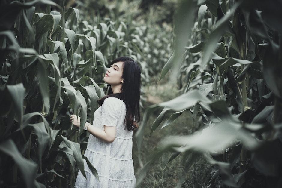 beautiful, corn field, farm