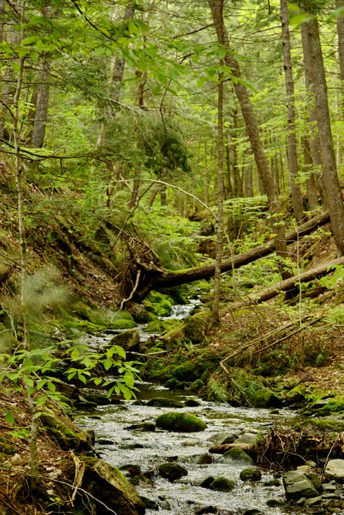 Free stock photo of forest, stream