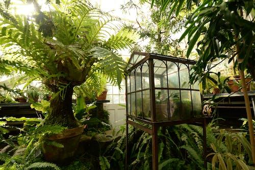 Free stock photo of botanic, botanical garden, botanical gardens, green house