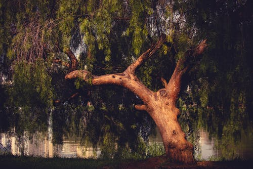 Gratis stockfoto met bomen, boom, milieu