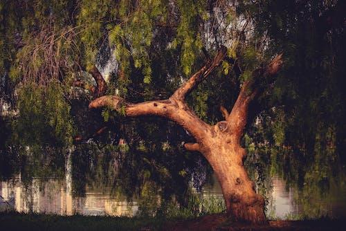 Free stock photo of environment, tree, trees