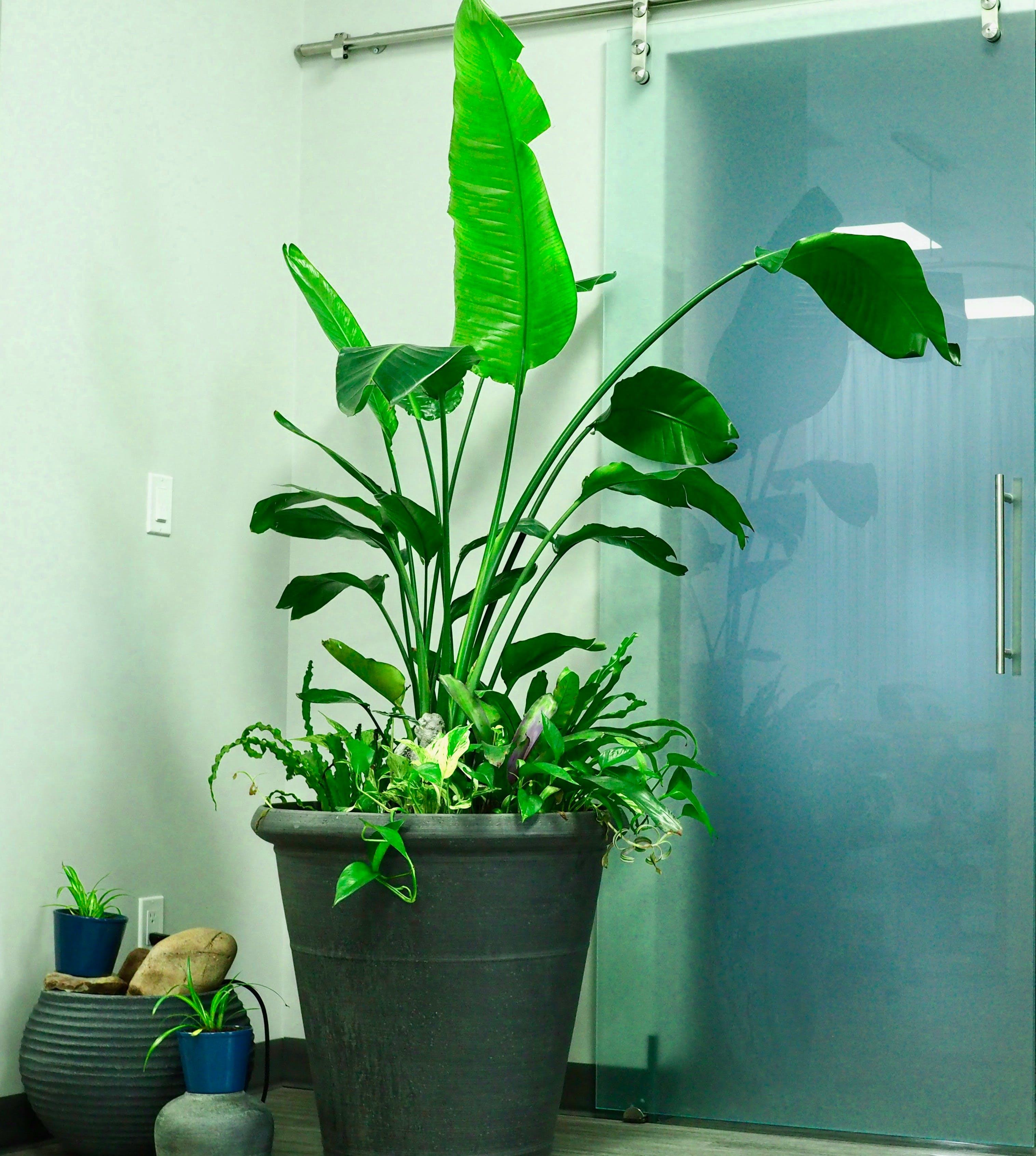 Free stock photo of glass doors, Green potted plant in office