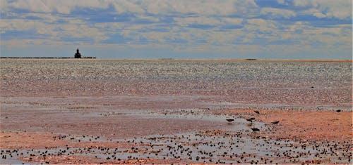 Free stock photo of beach, lighthouse, prince edward island