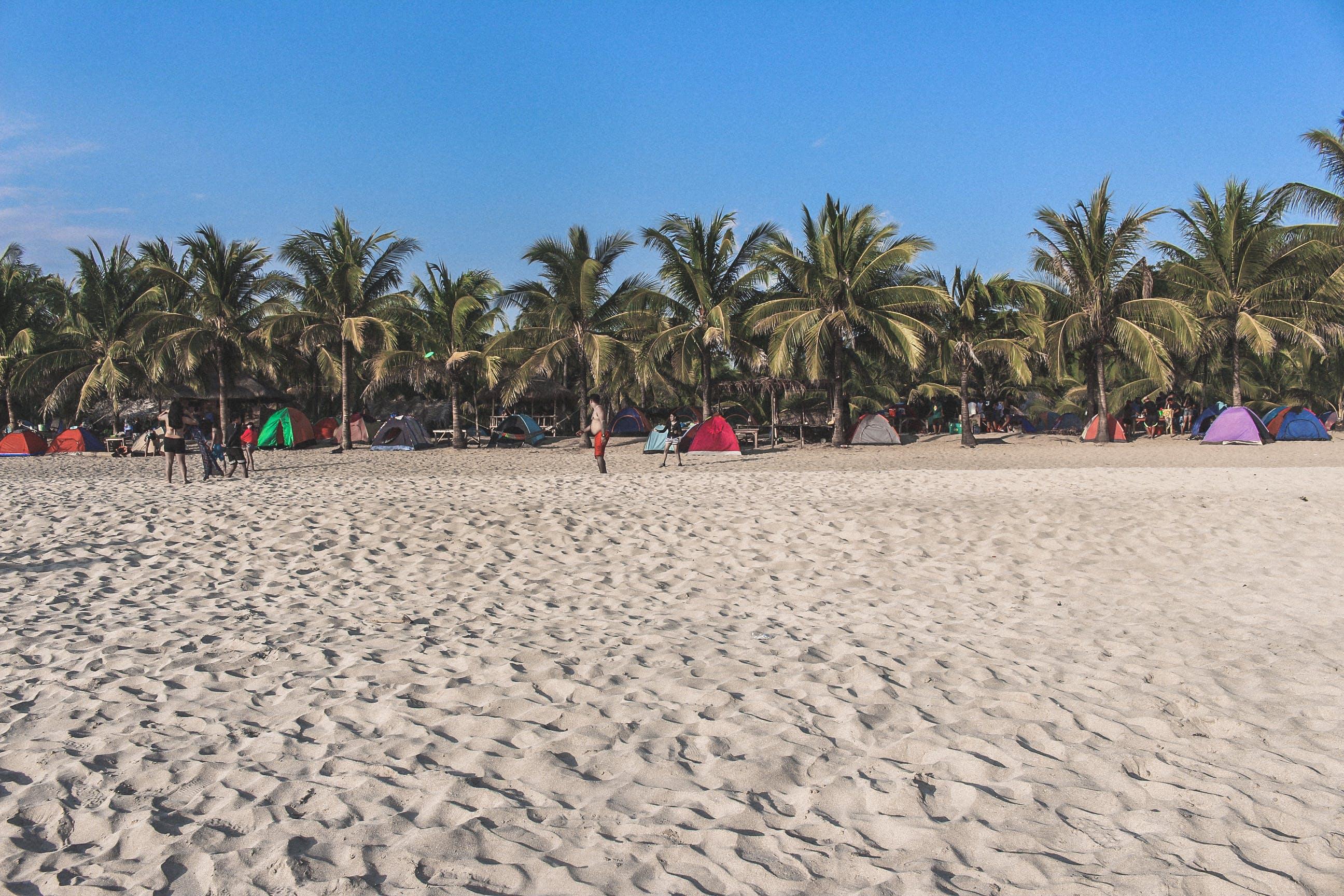 Foto d'estoc gratuïta de cocoters, davant de la platja, Filipines, mar