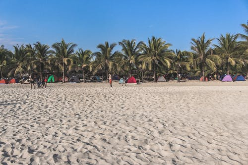 Free stock photo of beach, beach front, beachlife, coconut trees
