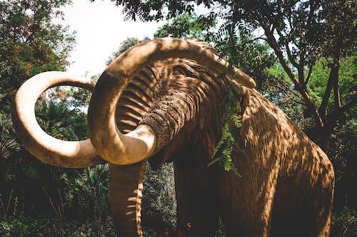 Immagine gratuita di animale, animale selvatico, mammut, parco
