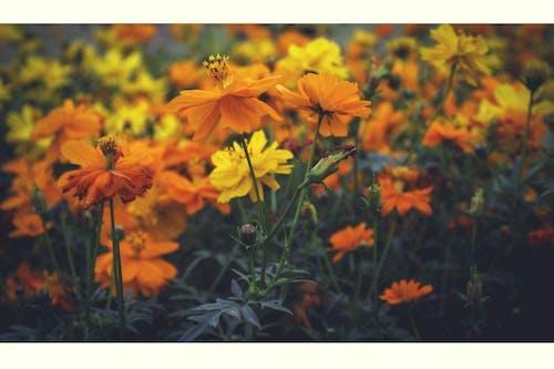 人造花, 美丽的花 的 免费素材照片