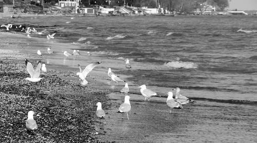 해변의 무료 스톡 사진