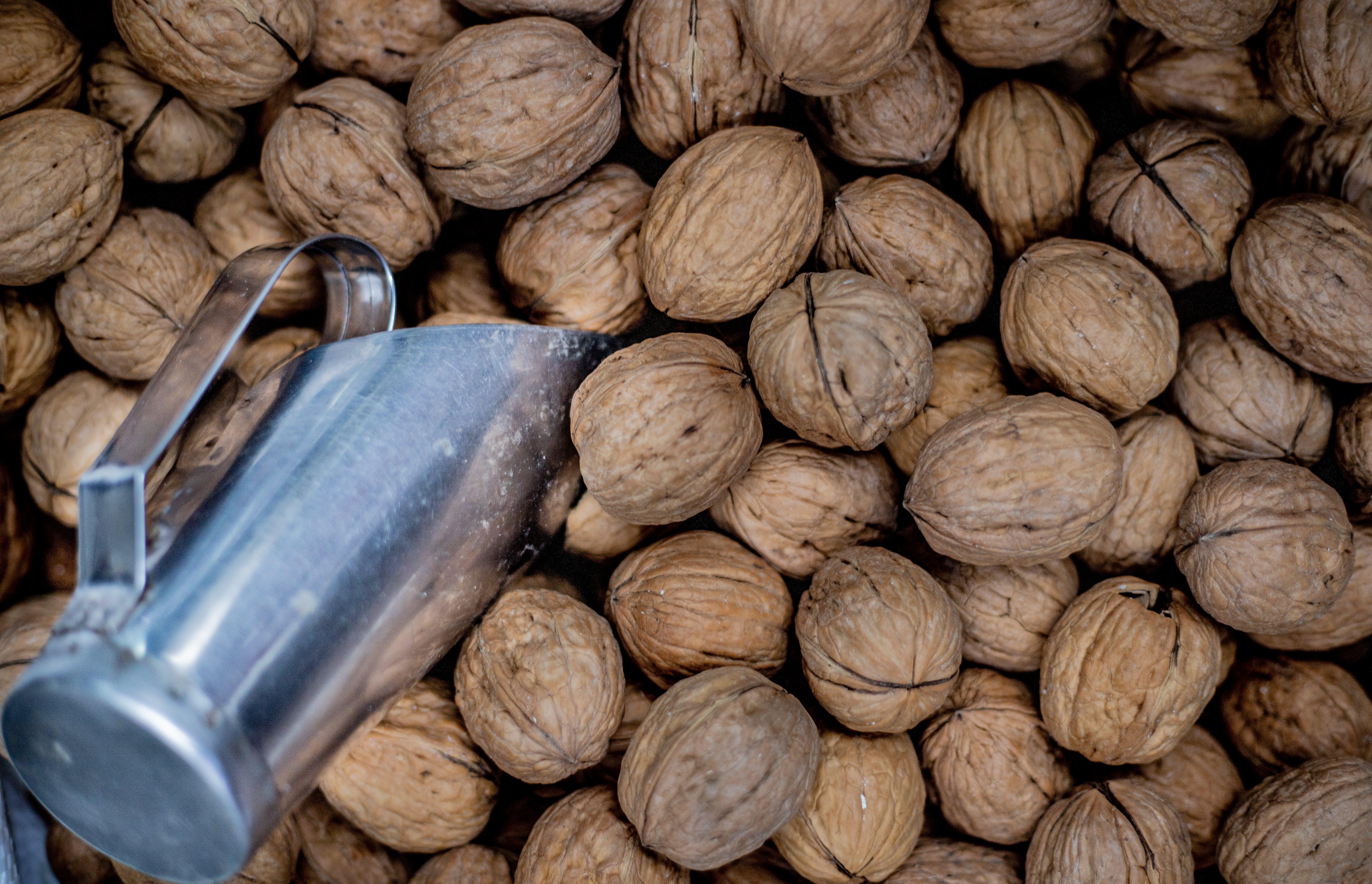 Free stock photo of fruit, nut, nuts, nutshell
