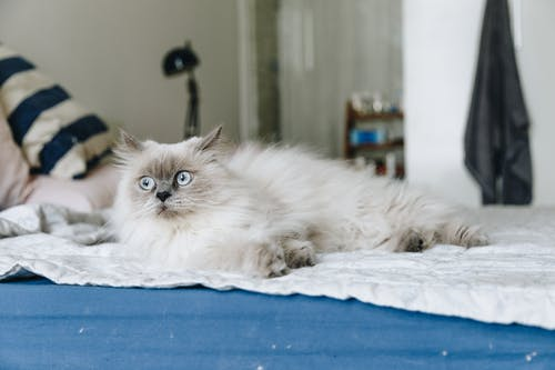 Photo of Cat Lying on Bed