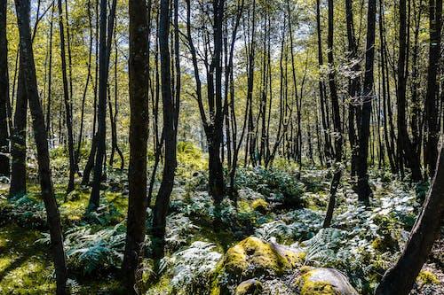 Δωρεάν στοκ φωτογραφιών με βράχια σκεπασμένα με βρύα, δασικός, Ινδία, κορμοί δέντρων