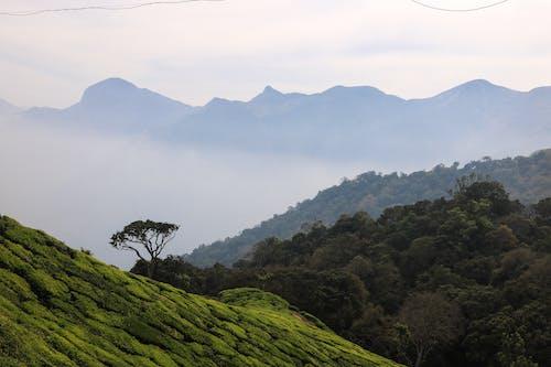 Δωρεάν στοκ φωτογραφιών με βουνά, γήπεδα, δέντρα, ομίχλη