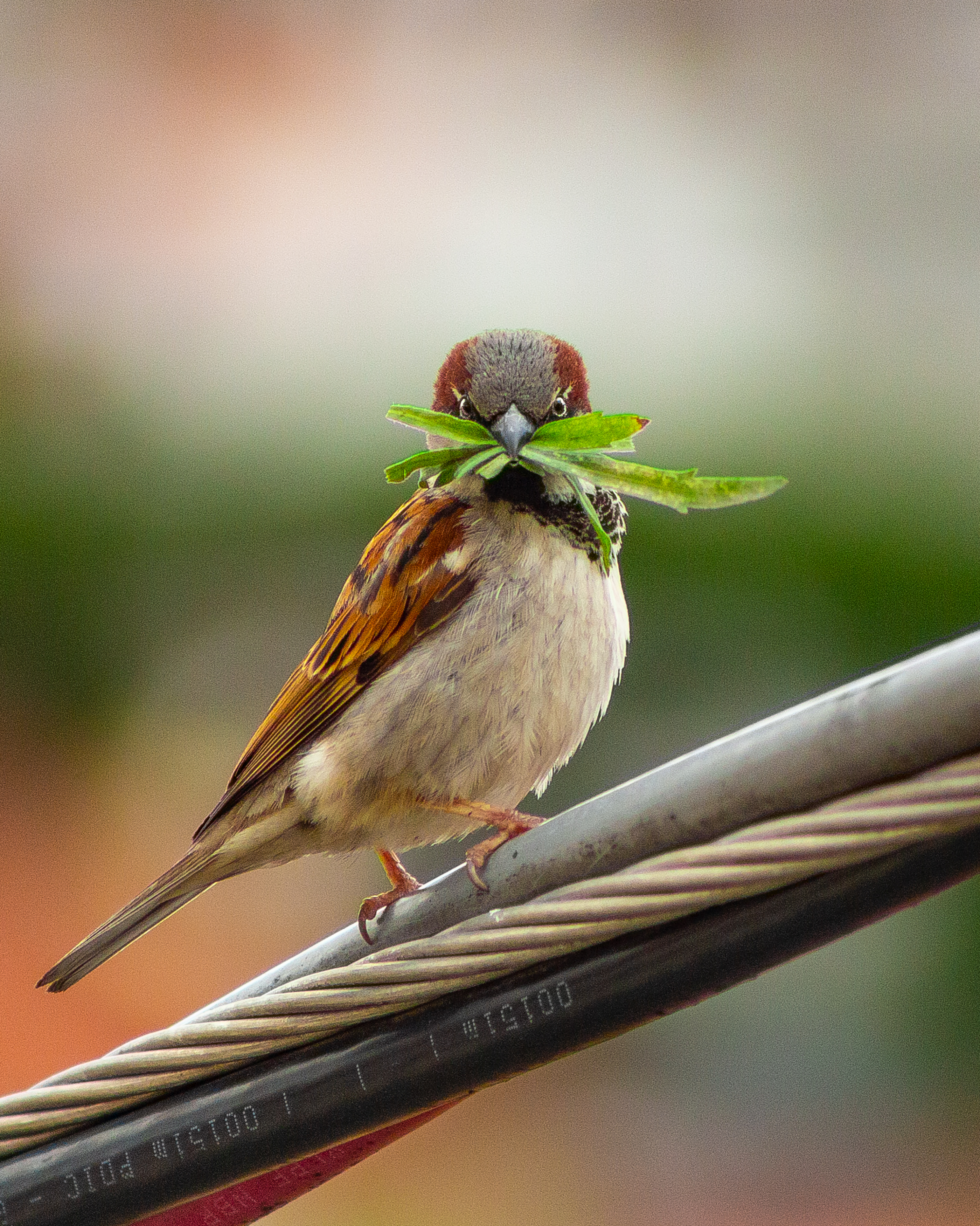Close-Up Photo of Bird Perched On Cables