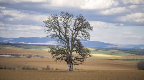 Foto d'estoc gratuïta de arbres, bellesa a la natura, cel blau, meravellós