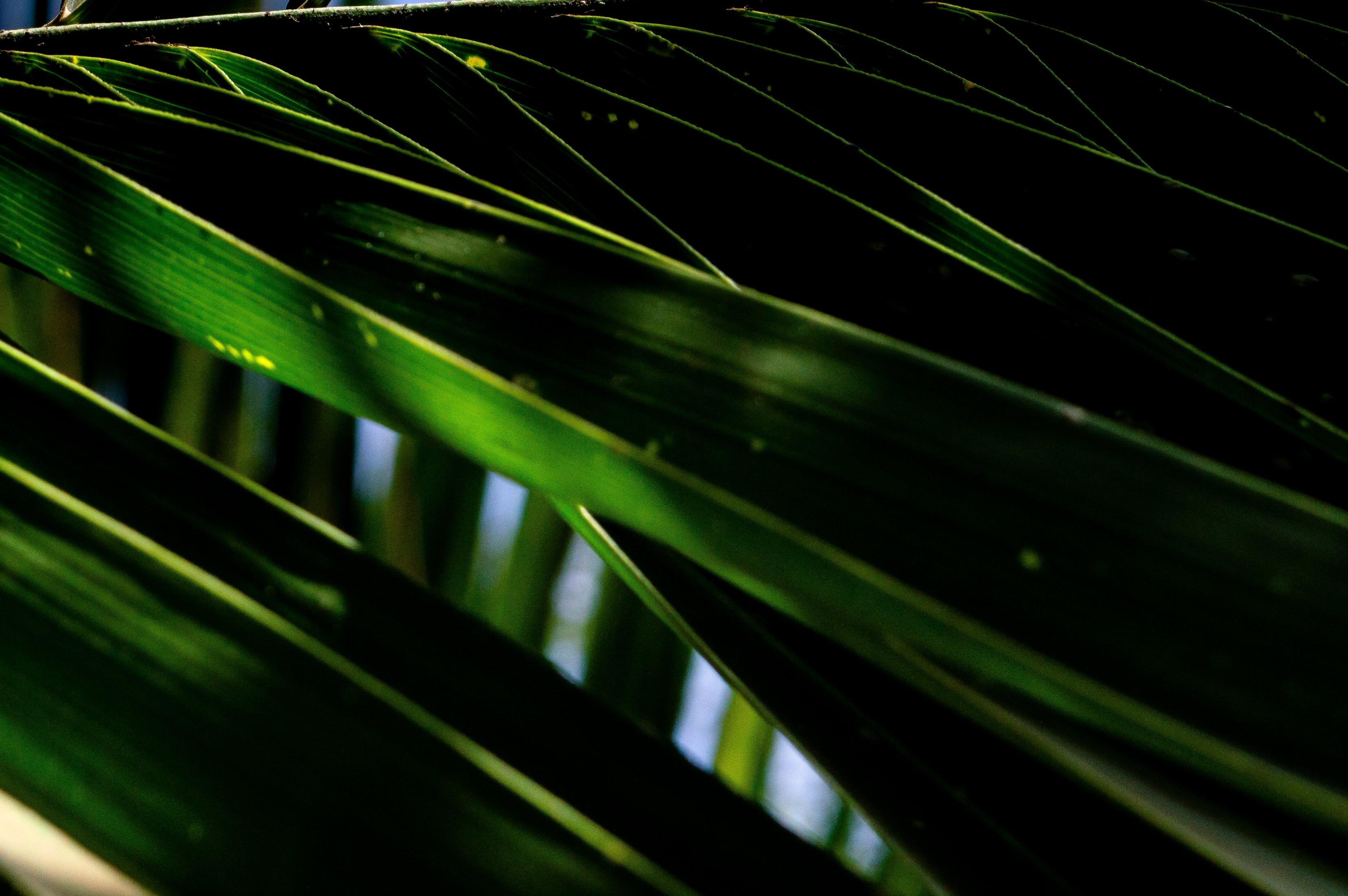 Gratis stockfoto met close-up, fabriek, groen, natuur
