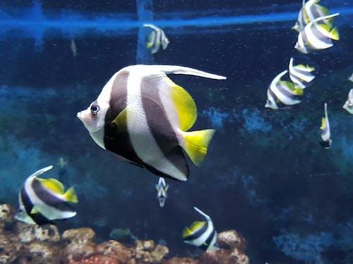 Foto profissional grátis de peixe, peixe tropical